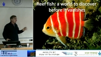 Reef Fish: A World to Discover Before it Vanishes